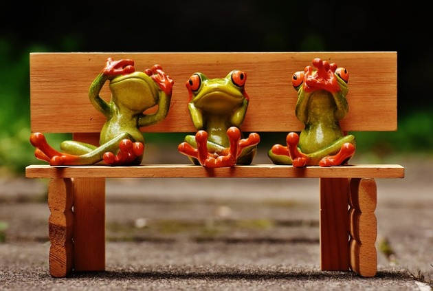 frogs-1610563_640